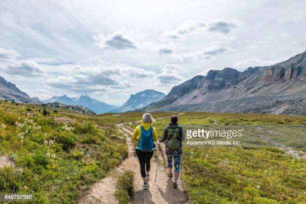Hikers follow mountain trail through alpine meadow