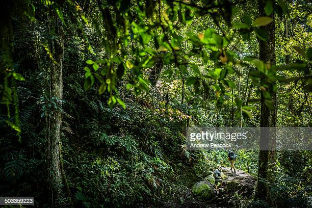 hikers, kokoda trail, between isurava and hoi - papua new guinea stock pictures, royalty-free photos & images