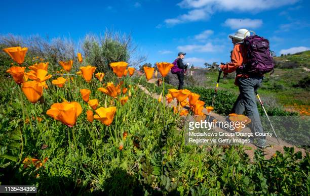 Hikers make their way past blooming California poppies along the Old Weir Canyon Trail in Santiago Oaks Regional Park in Anaheim Hills on Wednesday...