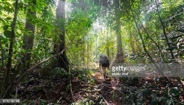 hikers, man walking on a footpath through the jungle, kuala tahan, taman negara national park, malaysia - taman negara national park stock photos and pictures