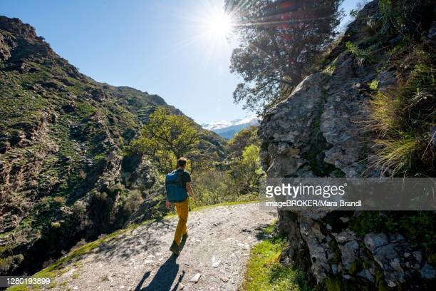 hikers on hiking trail vereda de la estrella, sierra nevada, mountains near granada, andalusia, spain - granada provincia de granada stock pictures, royalty-free photos & images