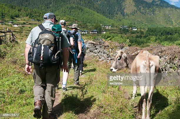 Hikers Pass a Cow in Bhutan