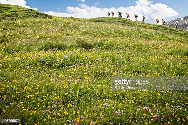 Hikers trek above a field full of colorful flowers in the Swiss Alps.