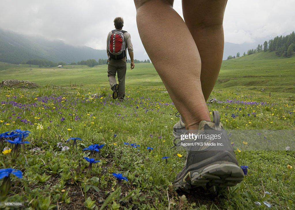 Hikers walk across meadow of wildflowers : Foto de stock