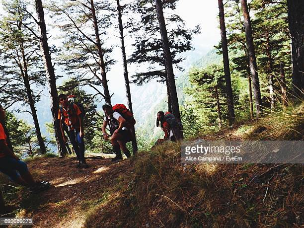 hikers walking in forest - alice vaillant photos et images de collection