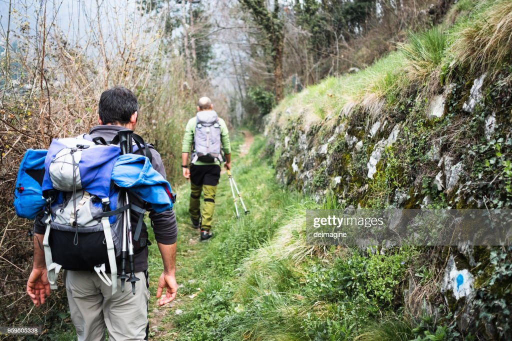 Hikers walking on forest path : Stock Photo