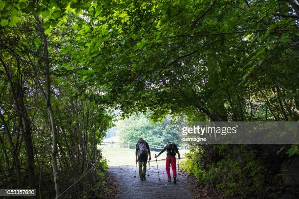 hikers walking on the forest trail - pilgrimage stock pictures, royalty-free photos & images