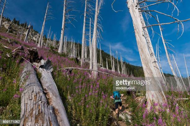 hiking adventure in the mountains - petrified wood stock pictures, royalty-free photos & images