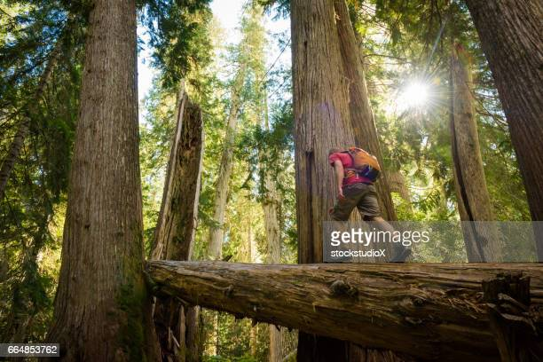 hiking ancient cedars - outdoor pursuit stock pictures, royalty-free photos & images