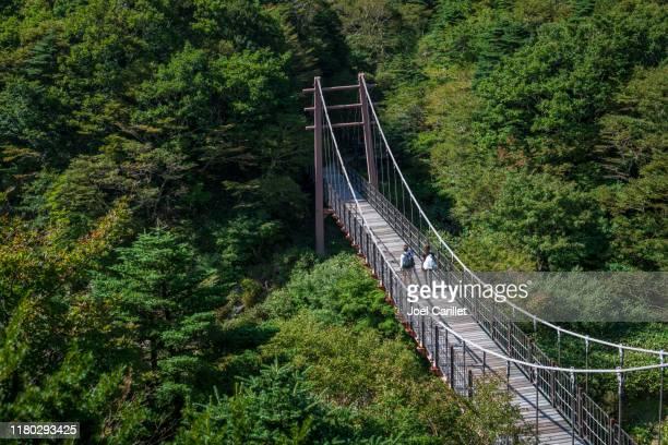 hiking gwaneumsa trail in hallasan national park, jeju island, korea - hallasan stock photos and pictures