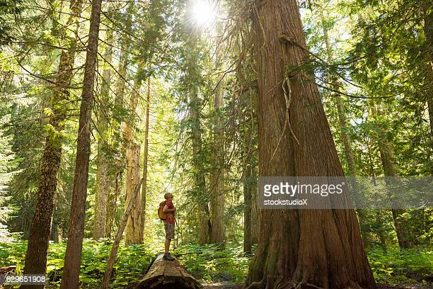hiking in a temperate rainforest - tall high stock photos and pictures