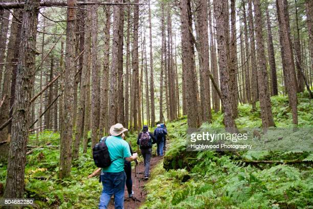 hiking in a young alaskan forest - highlywood stock photos and pictures