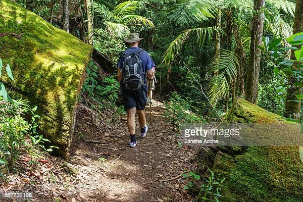 Hiking in Australian rainforest