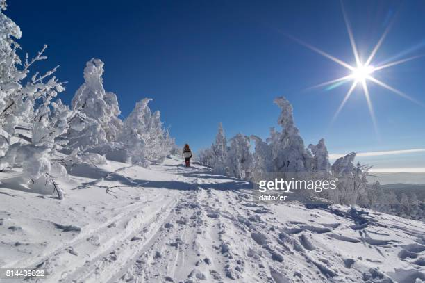 Hiking in backlit winter landscape with snow-covered trees, Great Arber, Bavarian Forest , Bavaria, Germany