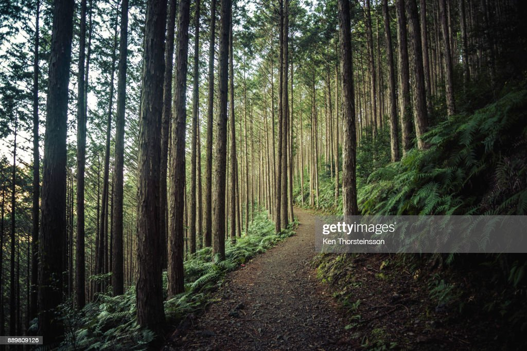 Hiking in the mountains of Wakayama, Japan : Stock Photo
