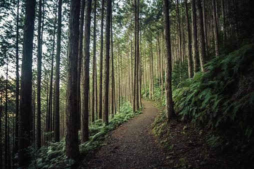Hiking in the mountains of Wakayama, Japan - gettyimageskorea