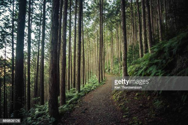 hiking in the mountains of wakayama, japan - woodland stock pictures, royalty-free photos & images