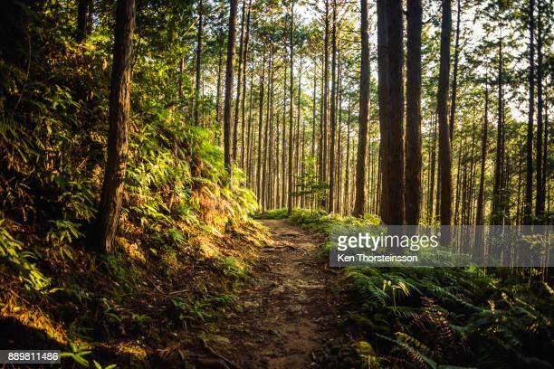 hiking in the mountains of wakayama, japan - präfektur wakayama stock-fotos und bilder