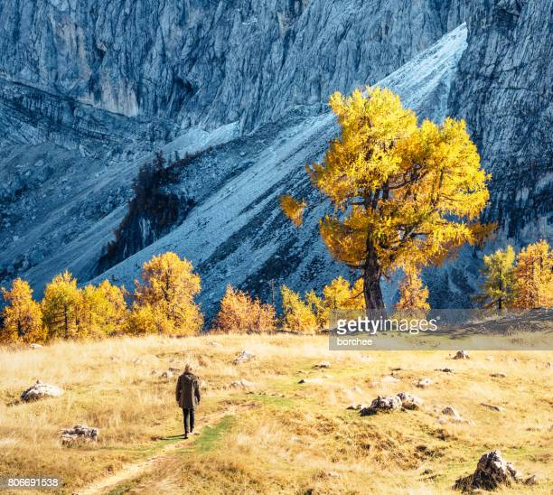 hiking in the mountains - larch tree stock pictures, royalty-free photos & images