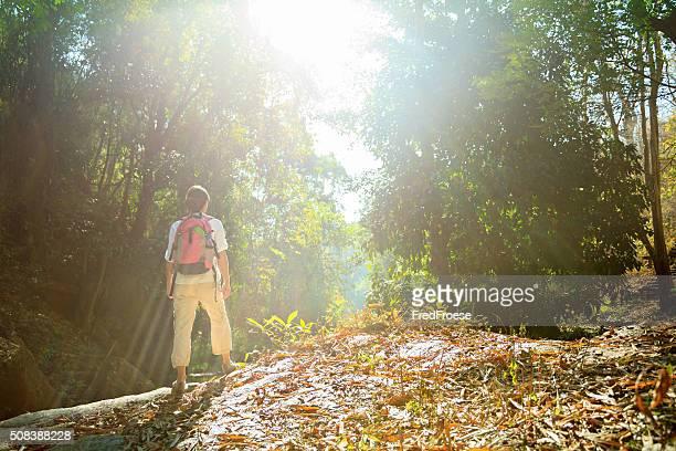 Wanderausflug in den Regenwald