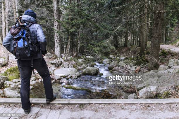 hiking in the silver fir forest - cuneo stock pictures, royalty-free photos & images