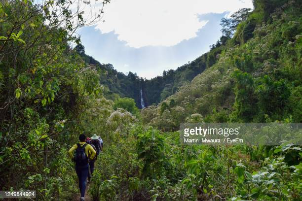 hiking in the wild jungle forest in rural kenya - kenya stock pictures, royalty-free photos & images
