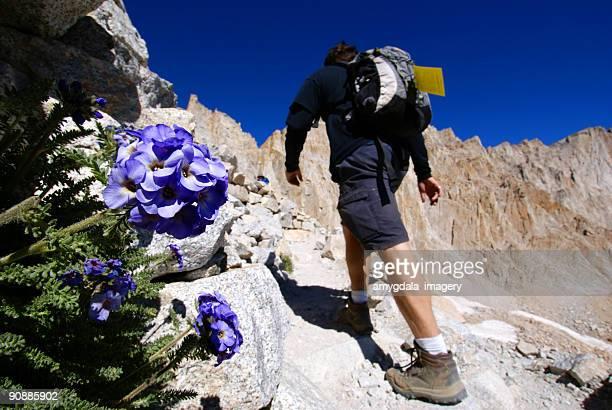 hiking mountain wildflower landscape