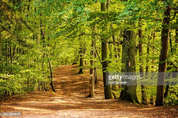 hiking path in a beech forest - deciduous tree stock pictures, royalty-free photos & images