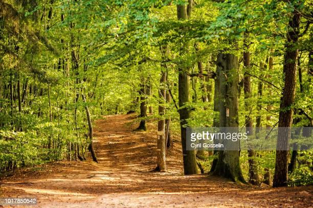 hiking path in a beech forest - árvore de folha caduca - fotografias e filmes do acervo