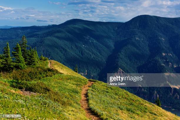 hiking path through lush meadow up to dog mountain in columbia river gorge, summer afternoon, washington state - columbia river gorge stock pictures, royalty-free photos & images