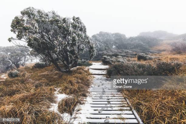 Hiking path through the frosty Fog