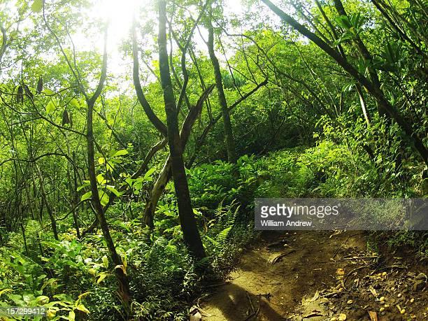 Hiking path through tropical jungle