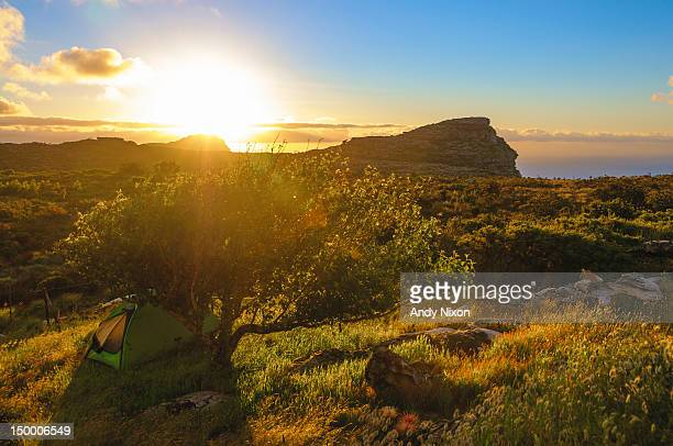 Hiking tent under apple tree, Table Mountain National Park, Cape Town, Western Cape, South Africa
