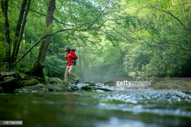 hiking the great smoky mountains national park - great smoky mountains stock pictures, royalty-free photos & images