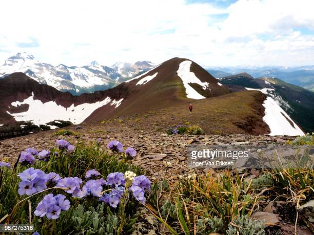 hiking the ridge with alpine flowers - eriksen foto e immagini stock