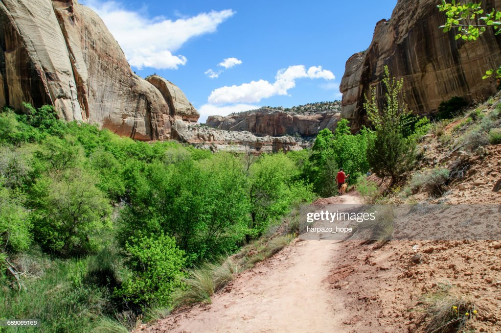 Hiking the trail near Lower Calf Creek Falls. : Stock Photo