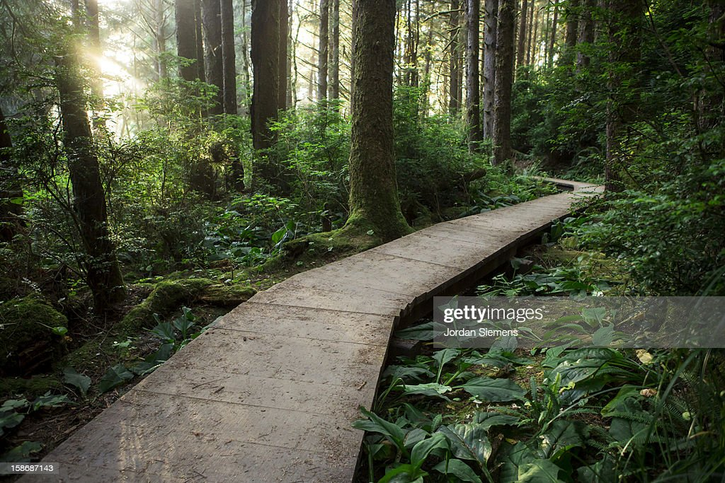 Hiking through the Redwood forest. : Stock Photo