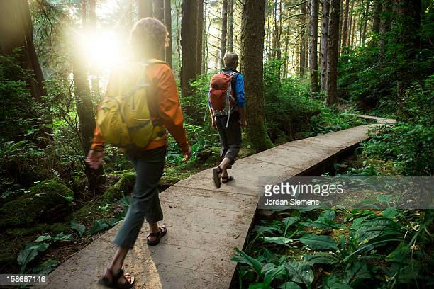 hiking through the redwood forest. - buitensport stockfoto's en -beelden