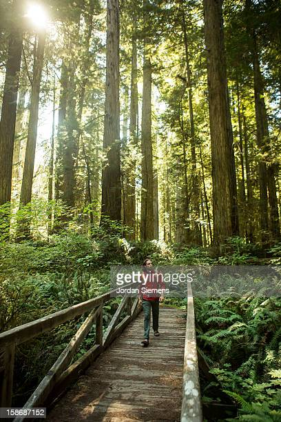 Hiking through the Redwood forest.