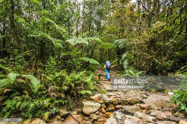 hiking through tropical forest of mount gede, west java - bogor stock pictures, royalty-free photos & images