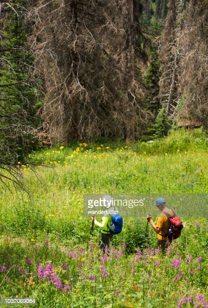 hiking through wildflowers past dying spruce trees - tree man syndrome stock photos and pictures