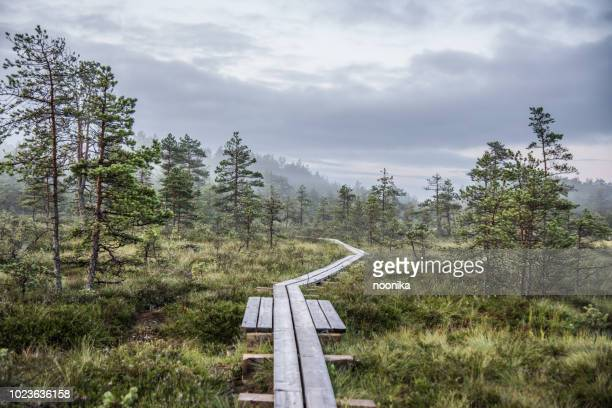 hiking trail at mukri bog, estonia - estonia stock photos and pictures