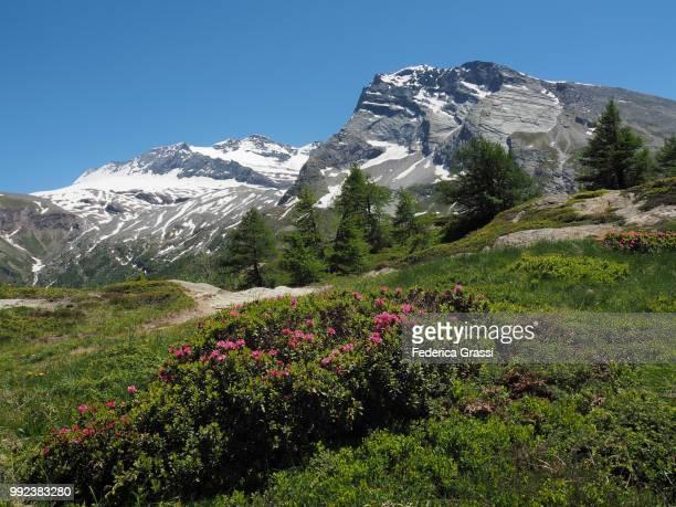 Hiking Trail at Simplon Pass