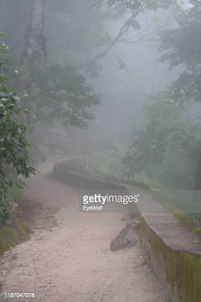 hiking trail covered with dense fog - sintra fotografías e imágenes de stock