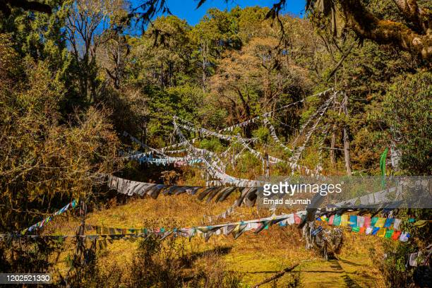hiking trail from dochula pass to the lungchuzekha monastery, bhutan - dochula pass stock-fotos und bilder
