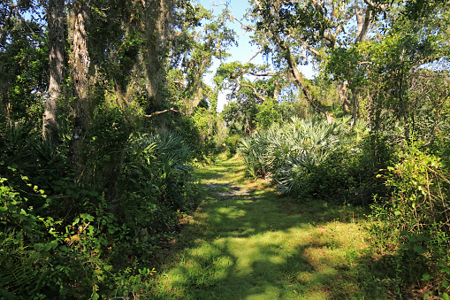 Hiking trail in D.J.Wilcox Preserve in Fort Pierce, Florida - gettyimageskorea