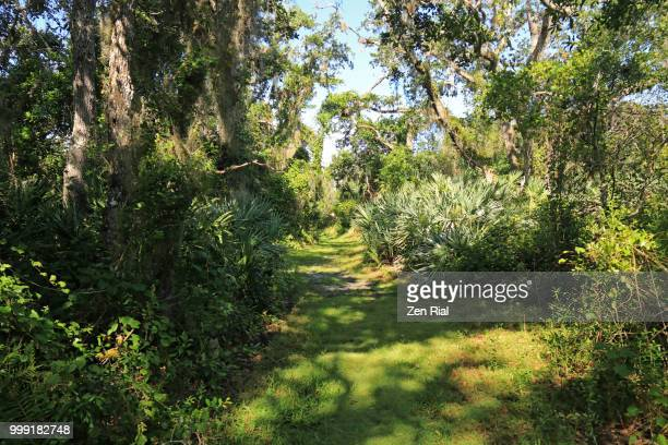 hiking trail in d.j.wilcox preserve in fort pierce, florida - florida landscaping stock pictures, royalty-free photos & images