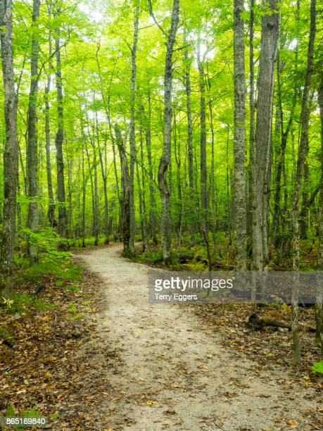 hiking trail in early autumn forest - hiawatha national forest stock pictures, royalty-free photos & images