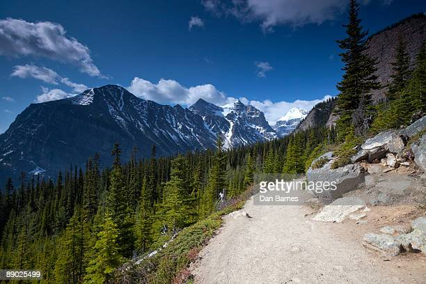 hiking trail in the canadian rockies - dan peak stock photos and pictures