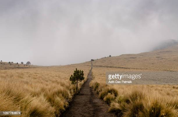 hiking trail in the iztaccihuatl-popocatepetl national park - alpine_climate stock pictures, royalty-free photos & images